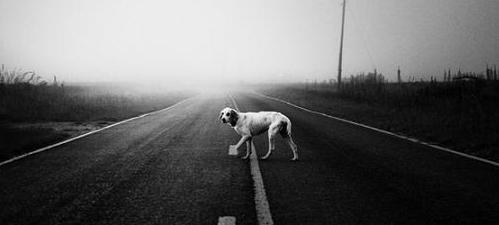 La carretera de los perros atropellados