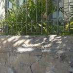 El jardín de la casa abandonada