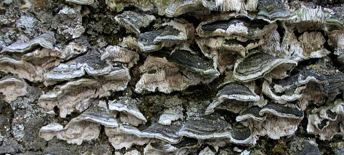 Escritos en la corteza de los árboles, de Julia Uceda
