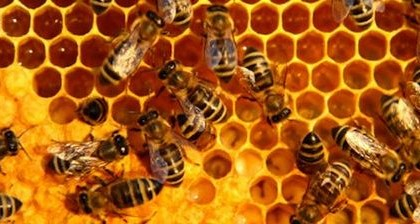 La subjetividad de la abeja