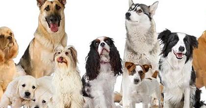 Nuestros perros