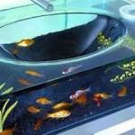 Los peces solitarios