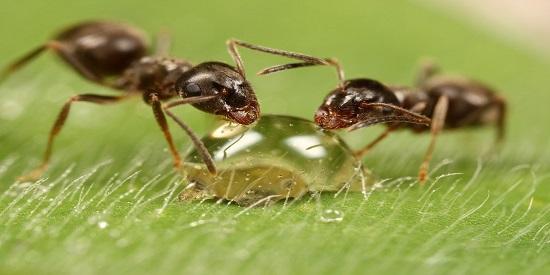 El orden en la Tierra se altera repentinamente. Los insectos mutan.