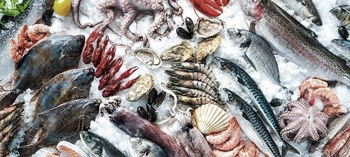 Literatura y pescadería